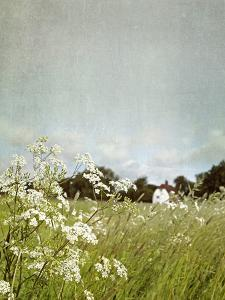 In the Pasture by Sarah Gardner