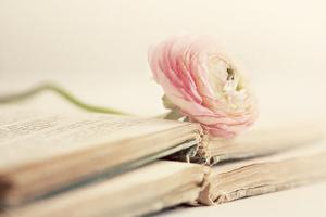 Peony Books by Sarah Gardner