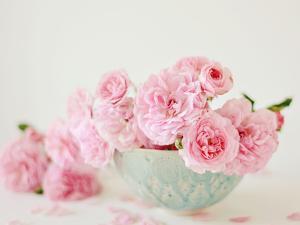 Petals and Porcelain by Sarah Gardner
