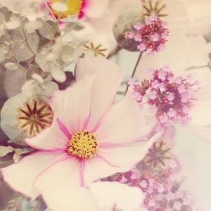 Pink Blossoms II by Sarah Gardner