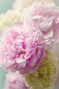 Soft Pink Blooms by Sarah Gardner