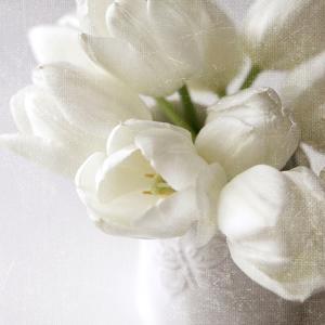 Vanishing in the White Elegance Square by Sarah Gardner