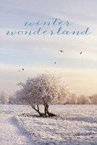 Winter Wonderland by Sarah Gardner