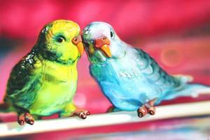 Lovebirds  2011  (oil on canvas) by Sarah Graham
