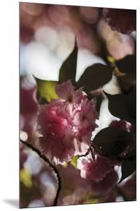 Bloom in Shadow by Sarah Hart Morgan