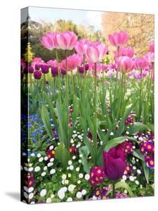 Spring Garden by Sarah Jane