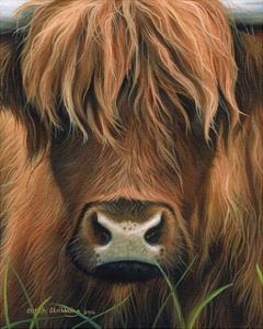 Cow Portrait by Sarah Stribbling