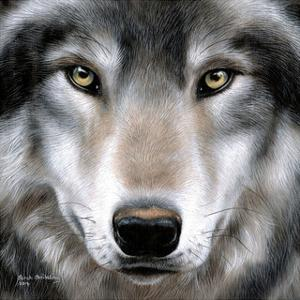 Grey Wolf Portrait by Sarah Stribbling