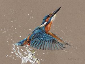 Kingfisher by Sarah Stribbling