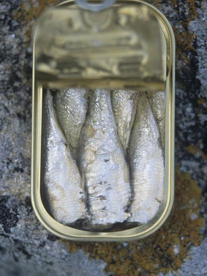 Sardines in a Tin-Joerg Lehmann-Photographic Print
