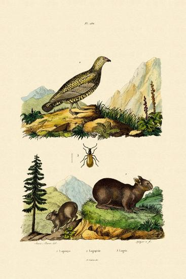 Sardinian Pika, 1833-39--Giclee Print