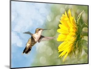Dreamy Image Of A Hummingbird Next To A Sunflower by Sari ONeal