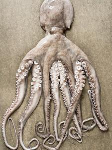 An Entire Octopus by Sarka Babicka