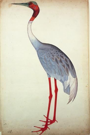 Sarus Crane, Painted for Lady Impey at Calcutta, C.1780- Sheikh Zainuddin-Giclee Print