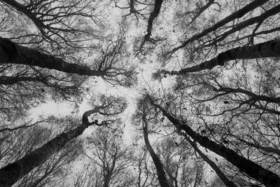 https://imgc.artprintimages.com/img/print/sassofratino-reserve-foreste-casentinesi-national-park-badia-prataglia-tuscany-italy_u-l-q12sw4i0.jpg?p=0