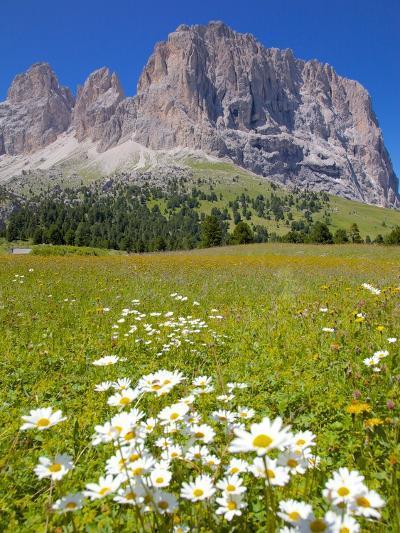 Sassolungo Group and Daisies, Sella Pass, Trento and Bolzano Provinces, Italian Dolomites, Italy-Frank Fell-Photographic Print