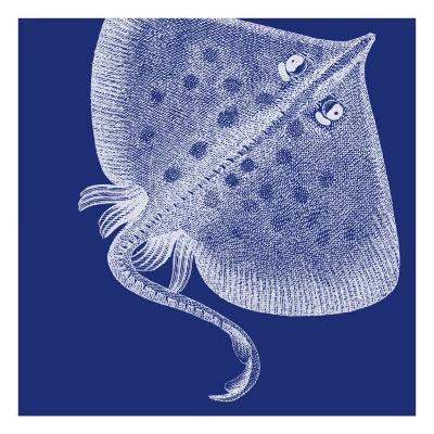 Saturated Sea Life III-Vision Studio-Art Print