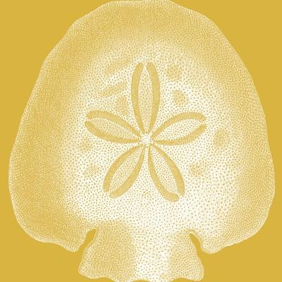 Saturated Shells I-Vision Studio-Art Print