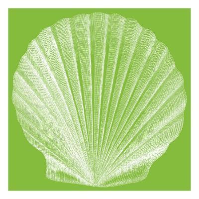 Saturated Shells II-Vision Studio-Art Print