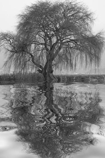 Sauce en Agua 1-Moises Levy-Photographic Print