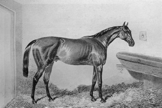 'Saucebox', c1840-1880, (1911)-Unknown-Giclee Print
