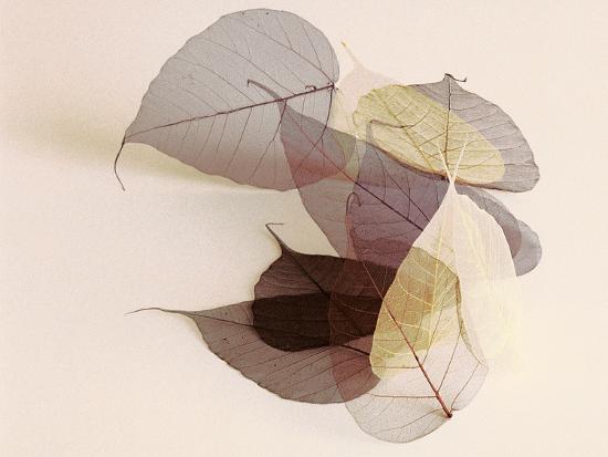 Sauvignon Blanc-Durwood Zedd-Photographic Print