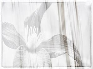 Black and white clematis by Savanah Plank