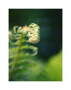Garden Fern by Savanah Plank