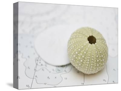 Nautical Urchin