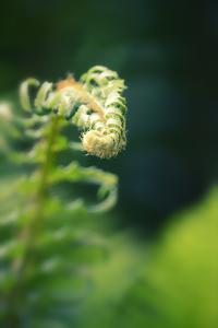 Garden Fern by Savanah Stewart