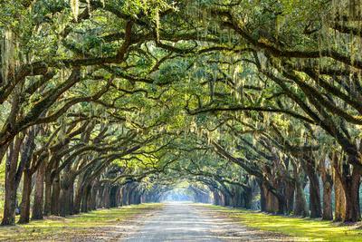 https://imgc.artprintimages.com/img/print/savannah-georgia-usa-oak-tree-lined-road-at-historic-wormsloe-plantation_u-l-q105k6t0.jpg?p=0