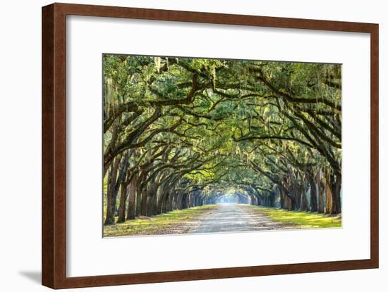Savannah, Georgia, USA Oak Tree Lined Road at Historic Wormsloe Plantation.-SeanPavonePhoto-Framed Photographic Print