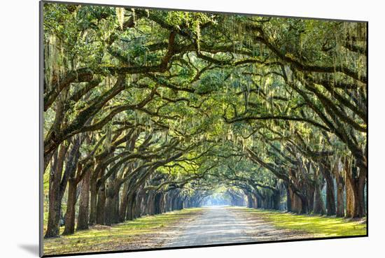 Savannah, Georgia, USA Oak Tree Lined Road at Historic Wormsloe Plantation.-SeanPavonePhoto-Mounted Photographic Print