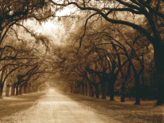 Savannah Oaks I-Alan Hausenflock-Photographic Print