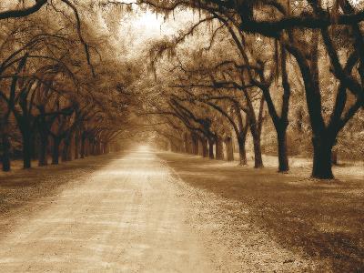 Savannah Oaks II-Alan Hausenflock-Photographic Print