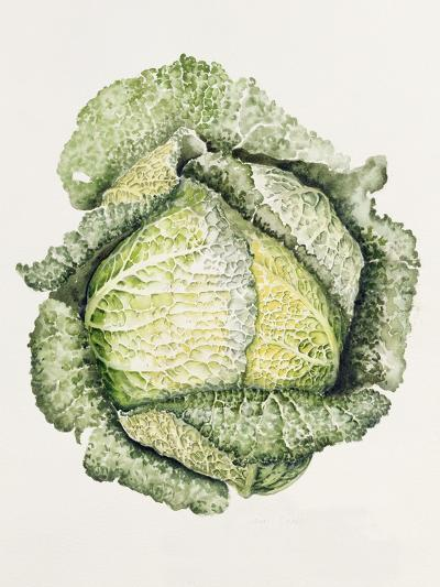 Savoy Cabbage-Alison Cooper-Giclee Print