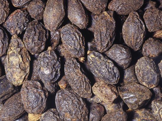 Saw Palmetto Whole Dried Berries (Serenoa Repens), Southeastern USA-Ken Lucas-Photographic Print