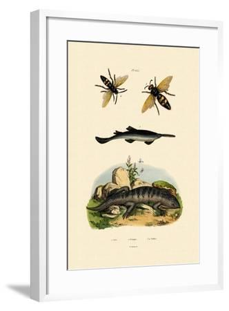Sawfish, 1833-39--Framed Giclee Print