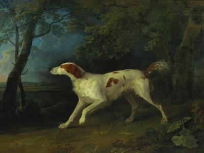 A Brown and White Setter in a Wooded Landscape, 1773