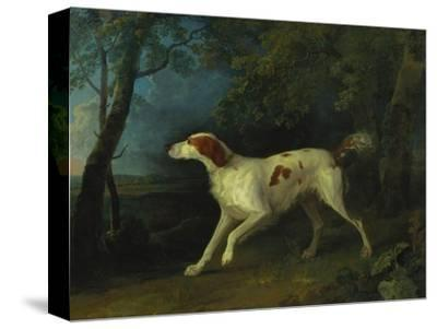 A Brown and White Setter in a Wooded Landscape