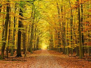 Autumn Pathway by sborisov