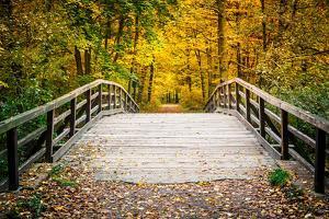 Wooden Bridge in the Autumn Park by sborisov
