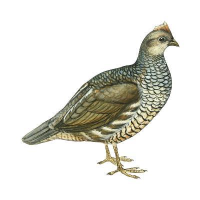 Scaled Quail (Callipepla Squamata), Birds-Encyclopaedia Britannica-Art Print