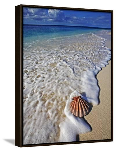 Scallop Shell in the Surf-Martin Harvey-Framed Canvas Print