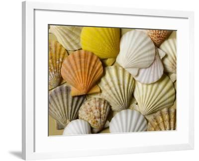 Scallops--Framed Photographic Print