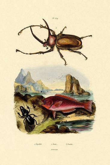 Scarab Beetle, 1833-39--Giclee Print