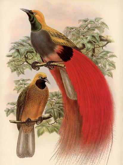 Scarlet Bird of Paradise-Alastair Reynolds-Art Print