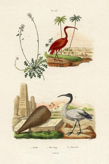 Scarlet Ibis, 1833-39--Giclee Print