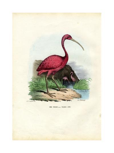 Scarlet Ibis, 1863-79-Raimundo Petraroja-Giclee Print