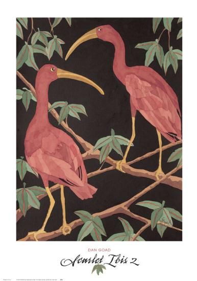 Scarlet Ibis II-Dan Goad-Art Print